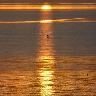Golden ripple
