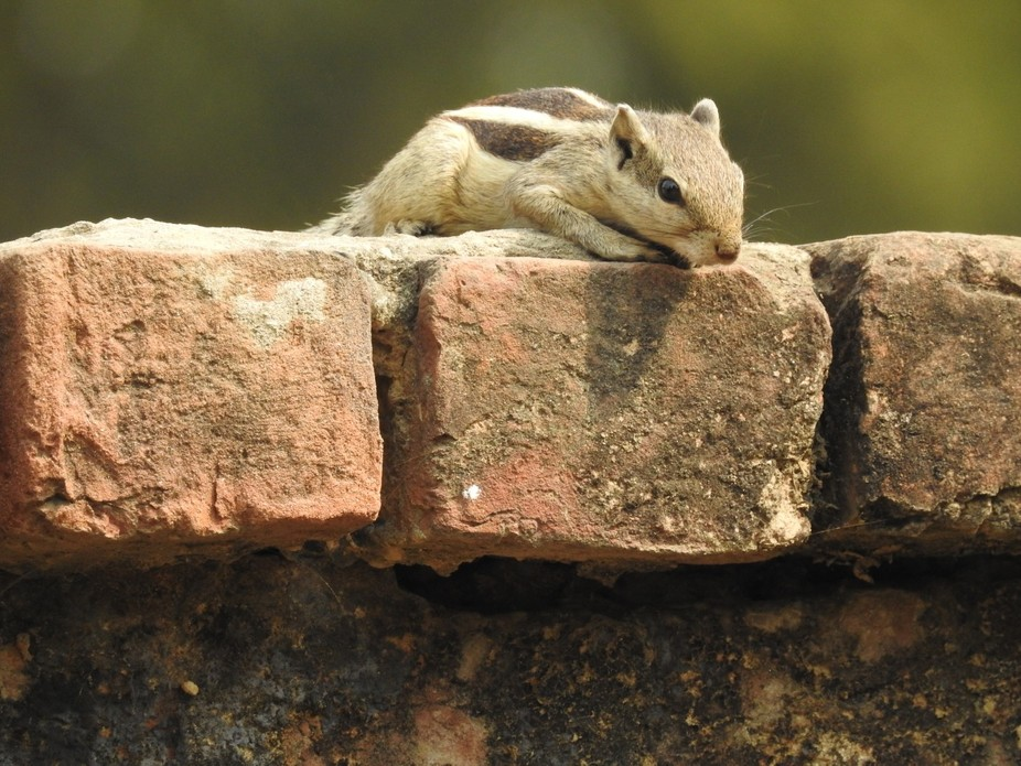 squirrel on the wall