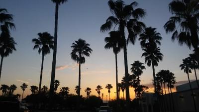 Beautiful Palmtrees and sunset:))❤