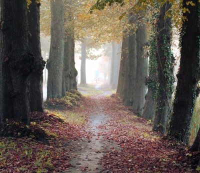 Forest path with fog copy