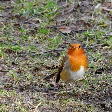 Said The Robin