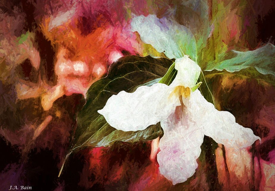 Trillium with Special Effects Applied