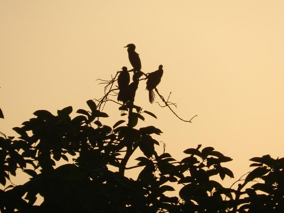 An evening with Birds