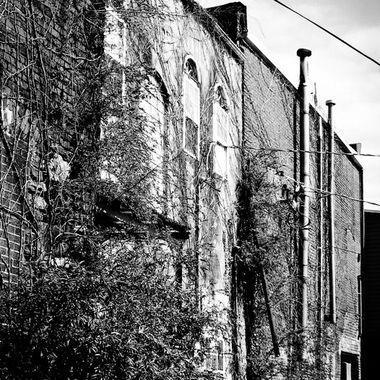 IMG_0465_edited urban trellis