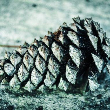 DSC_0324 - Copy_edited pine cone 2