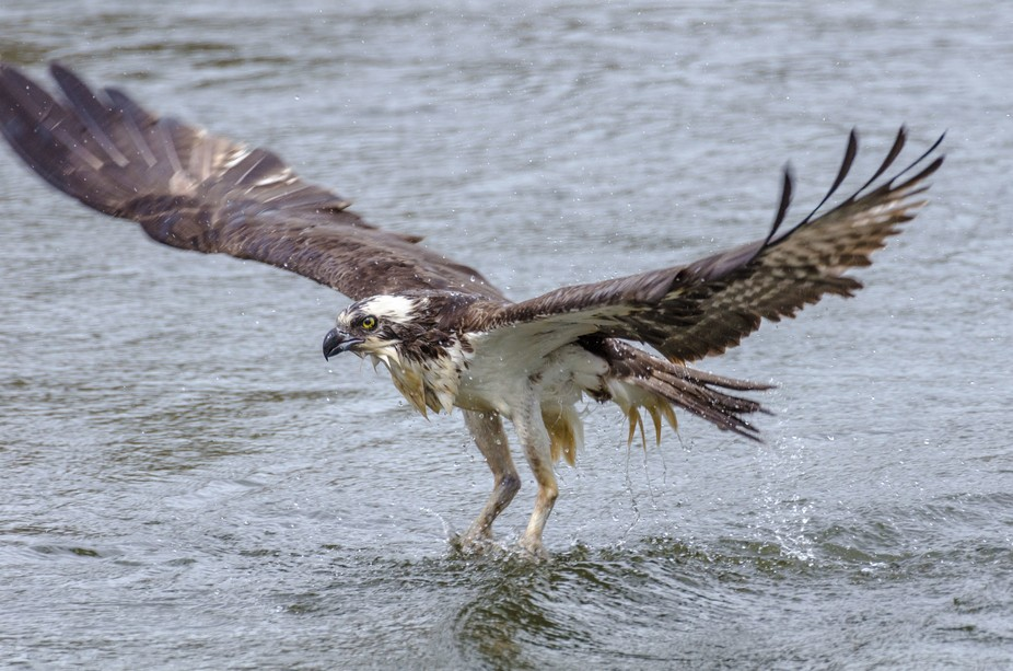 Osprey on the Go