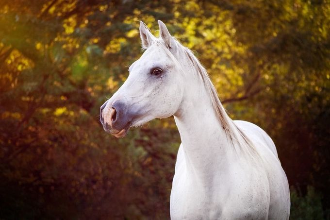 Beautiful Mare by sophiakjohnson - My Best Shot Photo Contest Vol 2