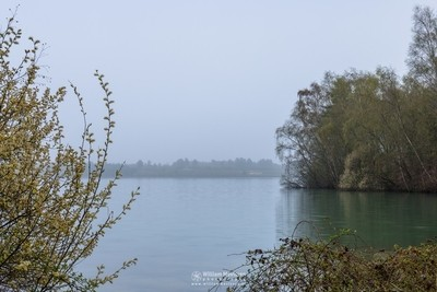 Grey Morning View