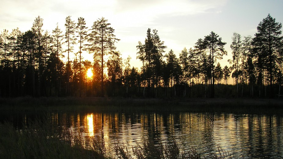 A little forest near one of local lakes here... And it's all during nice sunset and dusk
