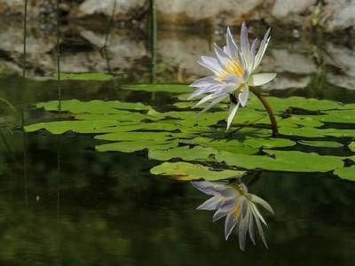 Natural mirror