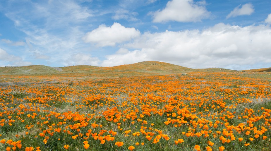 We were so blessed to see the poppies in such beautiful weather a few weeks ago. It was cloudy th...