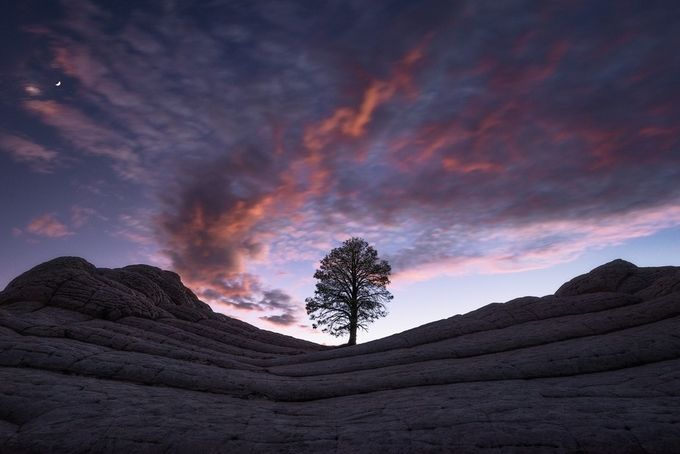 Sentinel  by Davemce - A Lonely Tree Photo Contest