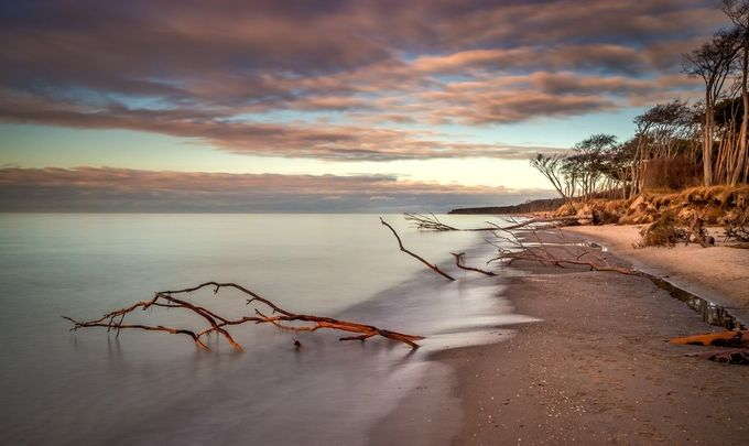 Westbeach ob the peninsula Darss Germany by RalfvonSamson - Fallen Trees Photo Contest
