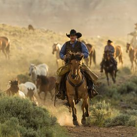 The wranglers are driving the horses from the stable at sunrise. The Golden Hour gives the scene a glow.