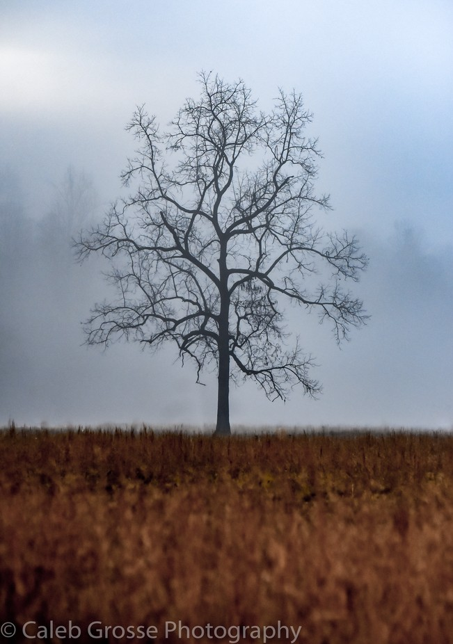 A Quiet Misty Morning by calebgrosse - Tree Silhouettes Photo Contest