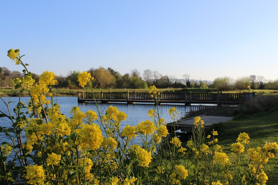 Corkagh Park fishing lake Clondalkin,Dublin