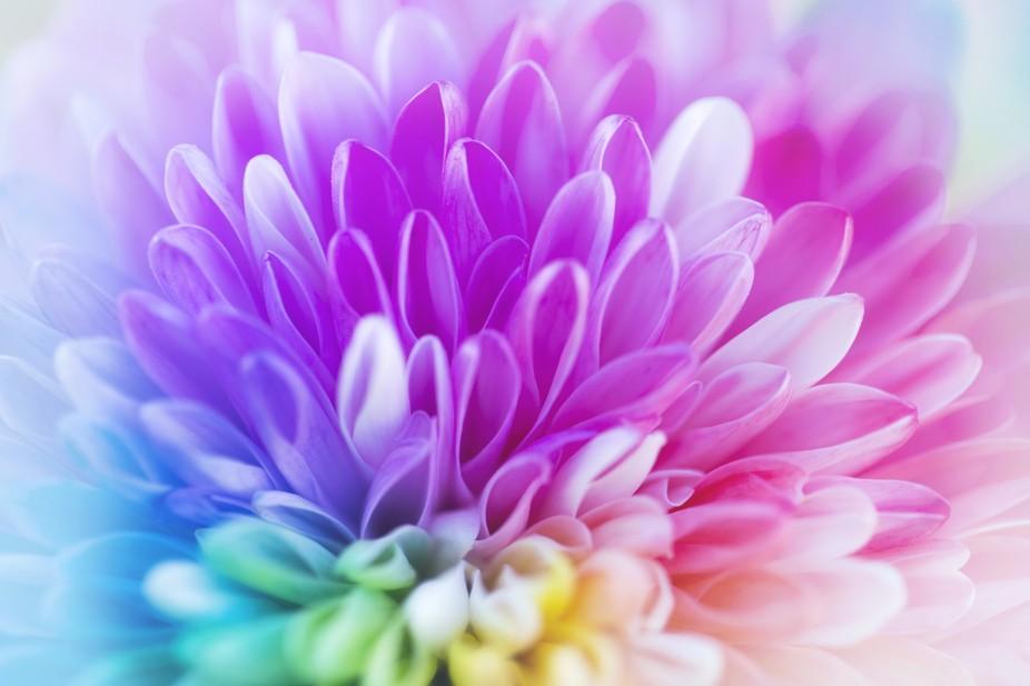 Rainbow Blooms