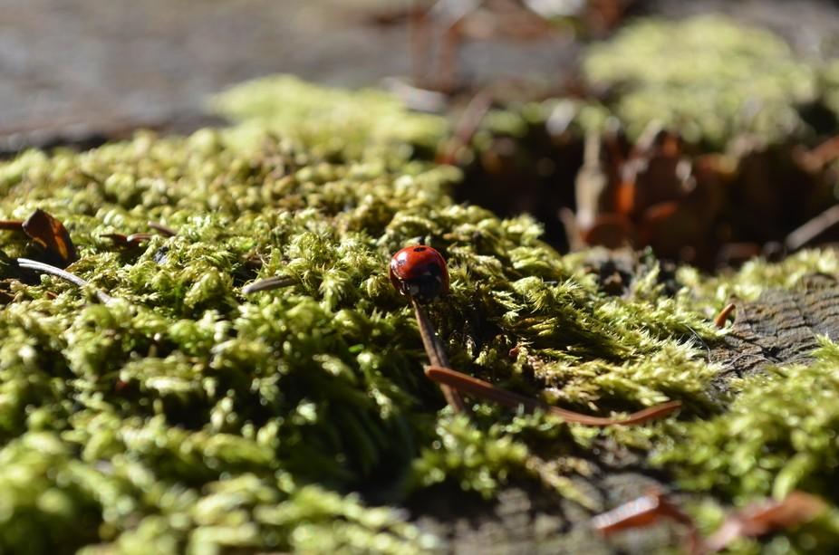 A small ladybug on a big stump.