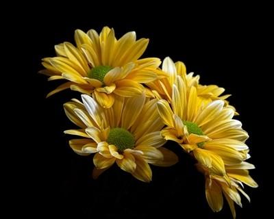 Floral Arc 0323