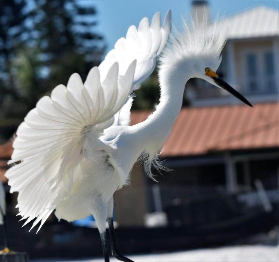 Look I've got wings