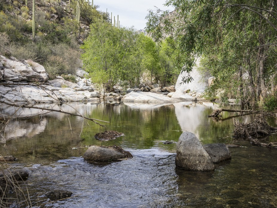 A stream in the desert mountains offers up some perfect mirrored reflections