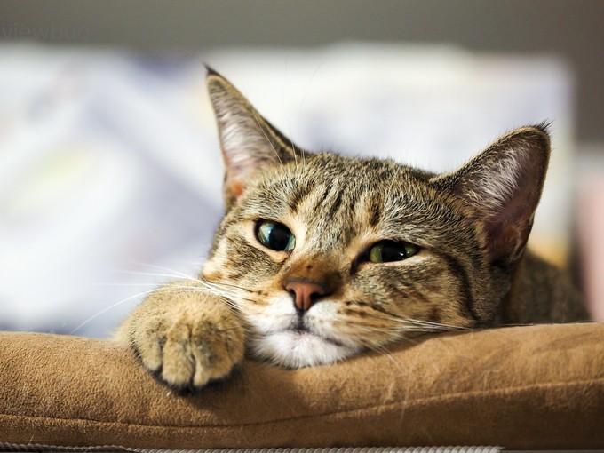 in ambush by alexey_gorshenin - Cute Kittens Photo Contest