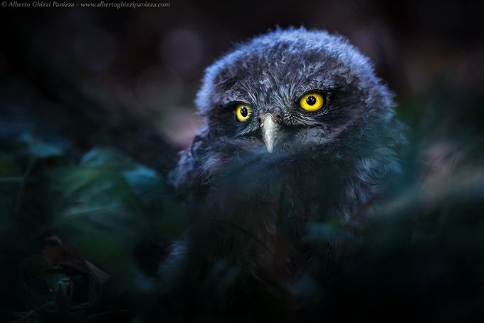 Young creature of the night by albertoghizzipanizza - Depth In Nature Photo Contest
