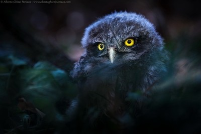 Young creature of the night