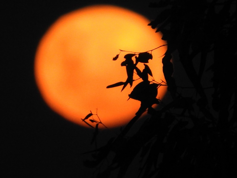 moon with a fairy leaf, or is that a witch on her broomstick?