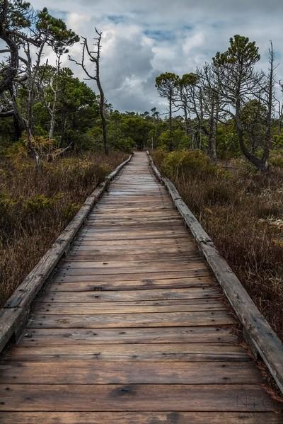 Shore Pine Bog