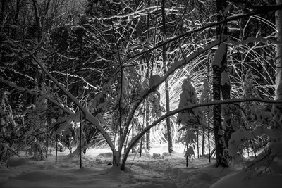 Winter forest full of surprises!