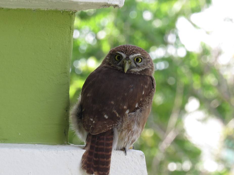 Owl that I saw on a wall in cancun Mexico.