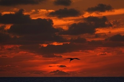 Red Sky At Night Pelican's Delight