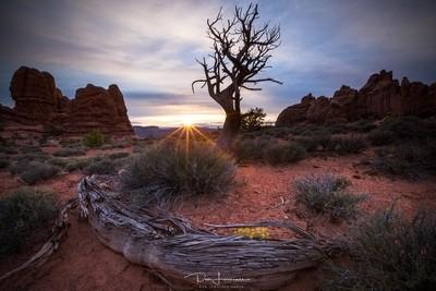 Juniper Sunrise