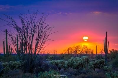 Desert-Sandstorm-Sunset
