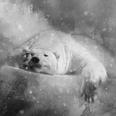 Polar Bear Peekaboo
