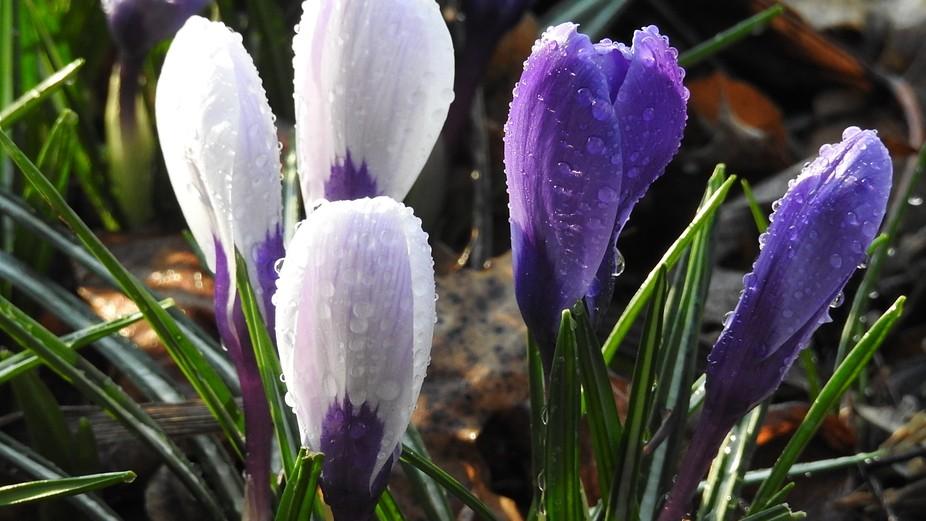 Morning spring flowers