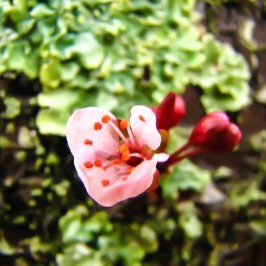 bud in spring