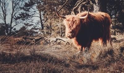 Another Highlander