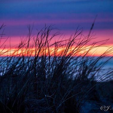 Sunset Colors Through Beach Grass