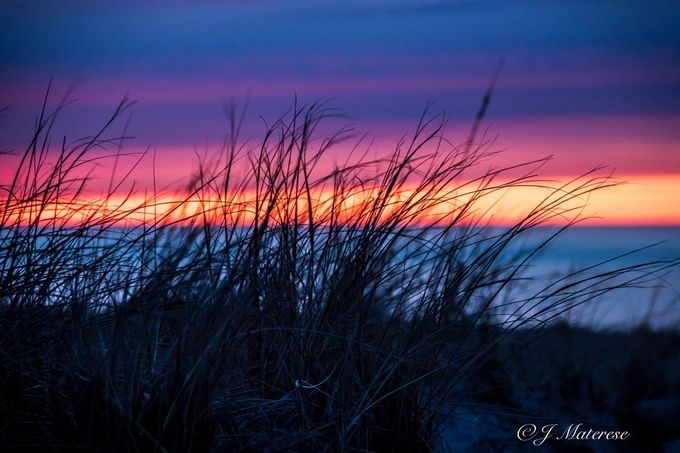 Sunset Colors Through Beach Grass