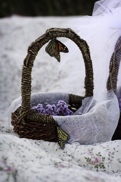 Basket of butterflies