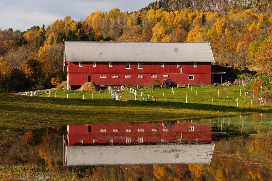 After taking a few autumn pictures at a small lake one morning in early October I walked down a track through a wood and over a hill to be met by this scene.  Beautiful early morning light gave this fantastic light on the big red barn and reflection in a lake created by recent heavy rain. Back drop to the barn was stunning autumn foliage and colours.  I have been back to this location several autumns and never seen this strength of colours.  This location in Asker Norway is a few kilometres from where we live a short distance from a lake which I visit every Autumn.