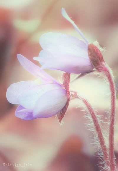 Springtime macro