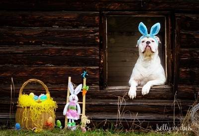 ~Seamus Easter Bunny~