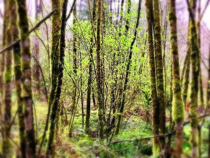 My forest is putting on spring duds!