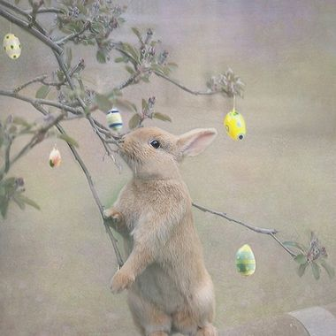 The Easter Bunny is getting ready for deliveries on Sunday. It's not often that you see him (or one of his helpers) in action....