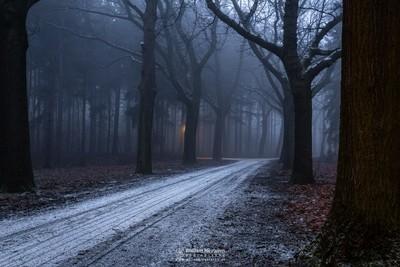 Street Light Fog