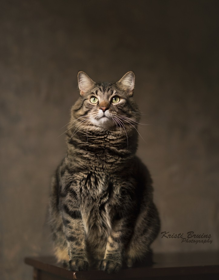 Chester by kristiraebruins - Feline Beauty Photo Contest