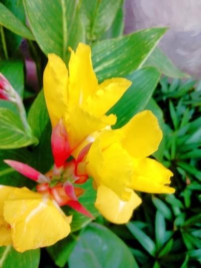 vividly contrusting colourful nature